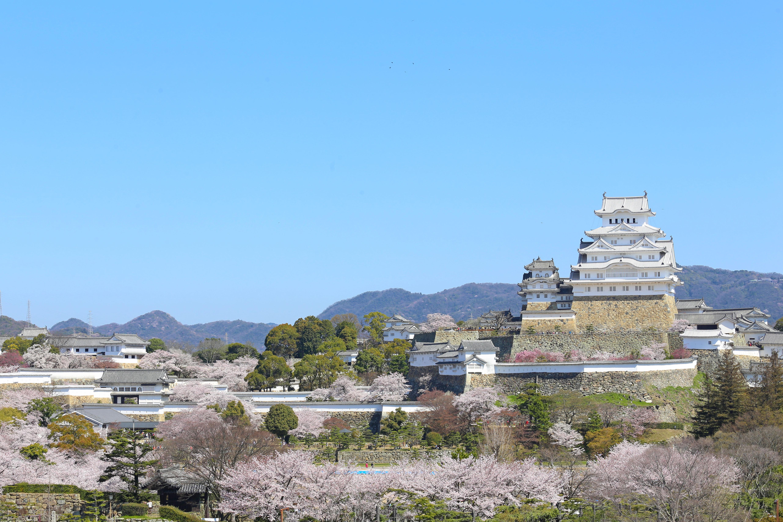 春=姫路城と桜(1)