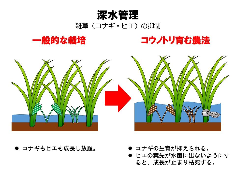 コウノトリ育む農法